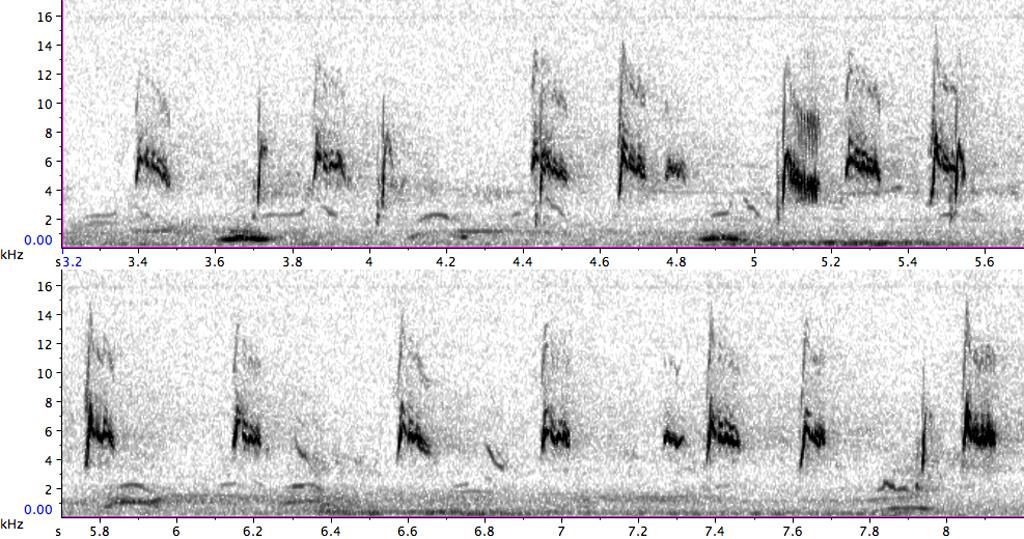 BIF050-3_PFR12065_1-11_080803_BIO_cornbun-calandra-FL-JUV-AD-FC-SC_d_st_geiselt_REF-S_B