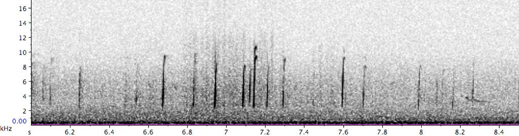 BIF935-3_PFR09742_1-10_140209_BIO_cornbun-calandra-100-FC_d_sn_werb-see-E_REF-S_B