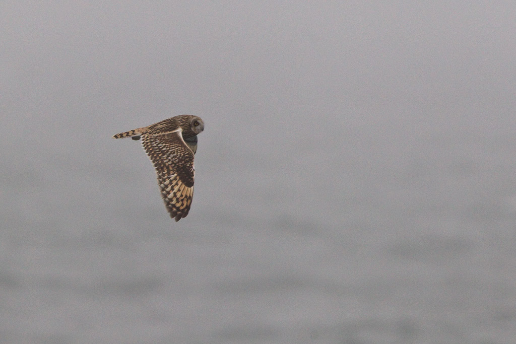 BIF694_MPU_MPU7846_11118_seowl-1_d_north-sea