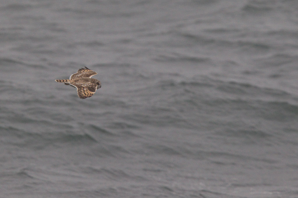 BIF695_MPU_MPU7848_11118_seowl-1_d_north-sea