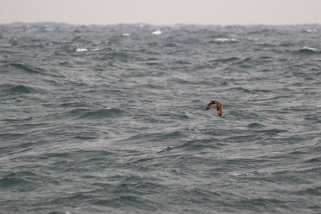 BIF700_MPU_34A2613_151015_seowl-1_d_north-sea