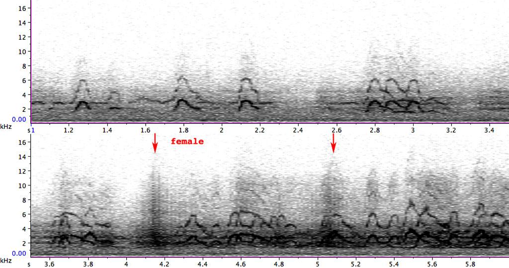 BIF883-3_PFR00186_1-11_091203_ewig-FL-FC-WS_sn_l-luppewehr_REF-S