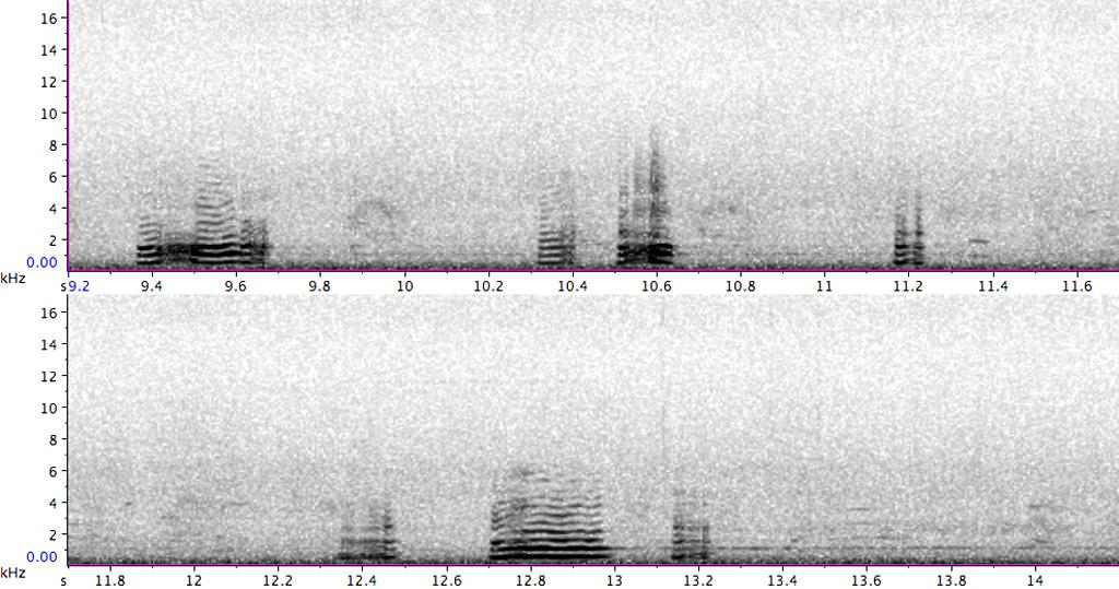 BIF939-3_PFR11807_1-10_160211_BIO_cangoo-canadensis-FL-FC_nl_biesbosch_REF-S_C
